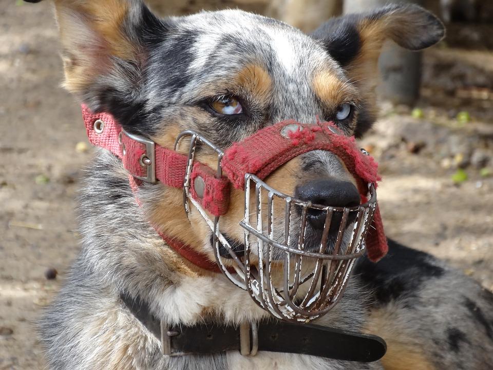 dog-1897631_960_720